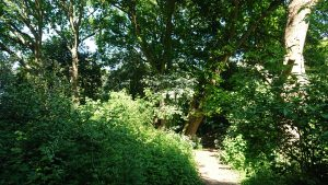 Emsworth Walking Trails